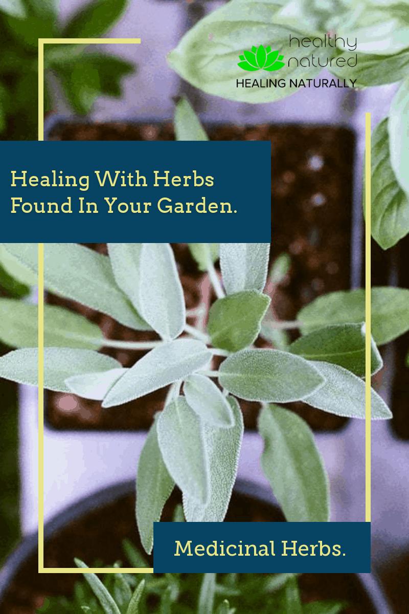 19 Medicinal Herbs - Amazing Healing With Herbs In Your Garden.