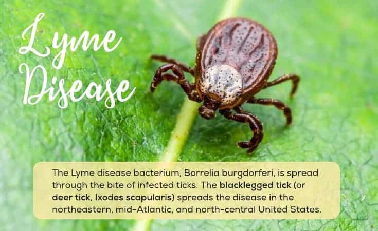 Natural Lyme Disease Treatment - Top Holistic Treatments