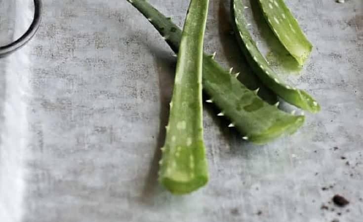 Harvest Aloe Vera Gel