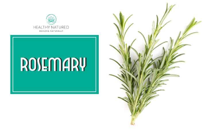 Rosemary Best Essential Oil Mosquito Repellent